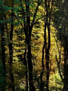 winter, grün (b. jahr)
