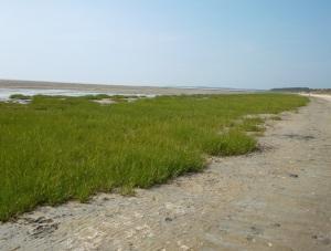 salzwiesenlandschaft