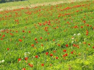 rotblumenfeld